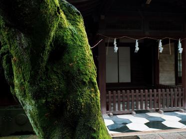 雨降る神社の境内