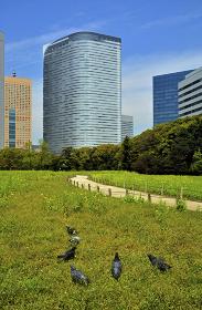 浜離宮恩賜庭園・お花畑と汐留高層ビル群