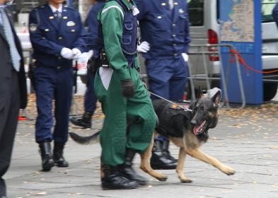 警視庁の警備犬(2010年APEC横浜開催時)