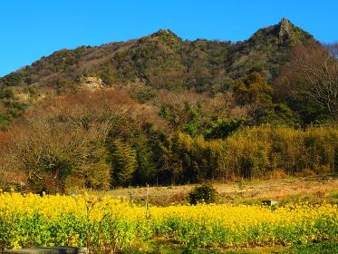 房総半島のマッターホルン伊豆ヶ岳と菜の花畑