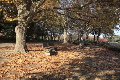 プラタナスの落葉とベンチ