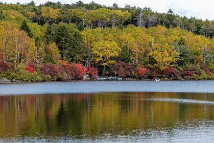紅葉が始まった長野県白駒池の風景 9月末
