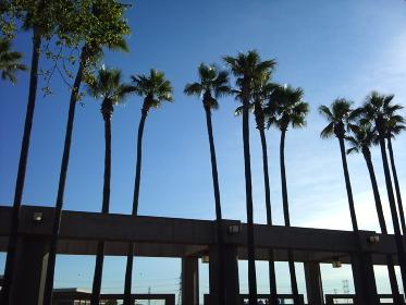 青空とヤシの木とハイウェイ