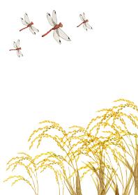 金色の稲穂 米 赤とんぼ 水彩 イラスト