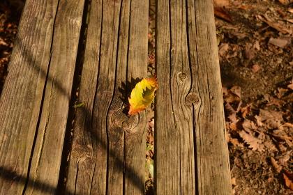 登山路の紅葉