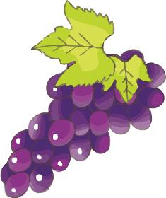 葡萄 ぶどう ブドウ