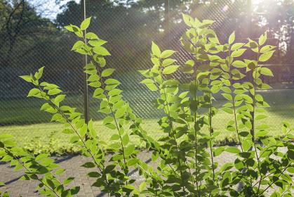 公園の雑木林の日向ですくすく育つ新芽