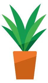 観葉植物、植木鉢