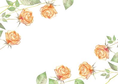 薔薇 フレーム オレンジ色 水彩 イラスト