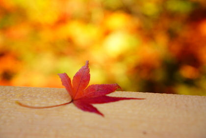 鶴仙渓の紅葉