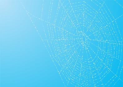 朝露が輝く蜘蛛の巣