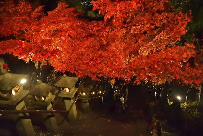 紅葉の下の参道