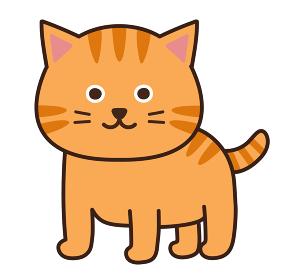 かわいいチャトラの猫 イラスト