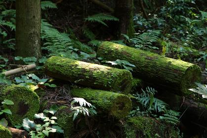 苔に覆われた樹木