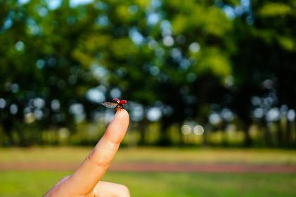 飛び立つてんとう虫