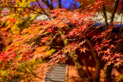 秋に赤く色づいた美しい紅葉ロード【福岡県東峰村】