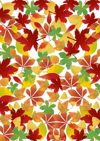 秋の紅葉:カラフルモミジの色づいた背景素材