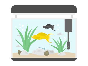 熱帯魚の水槽のイラスト