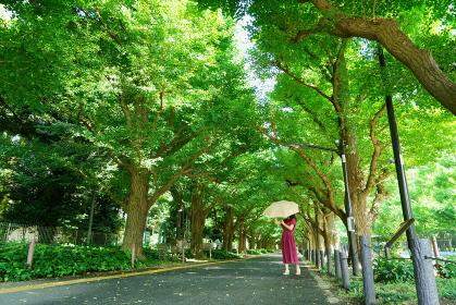 銀杏並木に立つ黄色い日傘で顔が隠れた赤いワンピースの女性