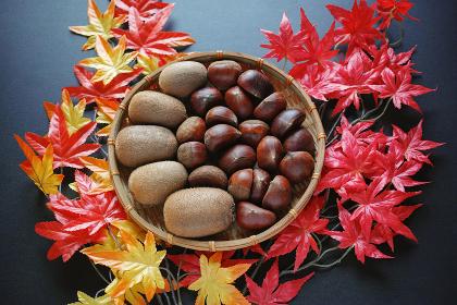 造花のモミジの上に笊に入れた栗とキウイフルーツ