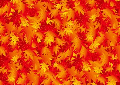 美しい紅葉のイラスト