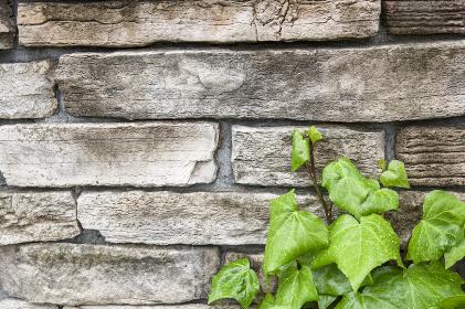 石材と若葉の背景素材
