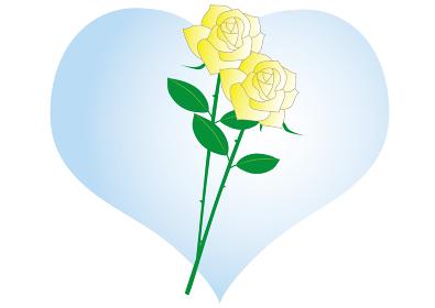父の日の白バラ