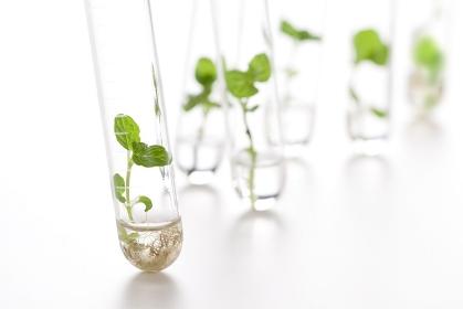 試験管で育つ植物