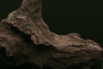 流木のグラフィック素材