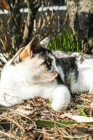 草むらの野良猫