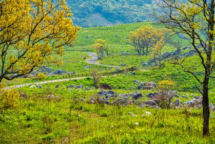 初夏の柔らかな光と緑の平尾台