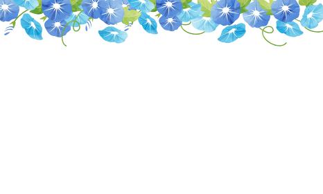 夏の朝顔の水彩風ベクターイラストフレーム背景(コピースペース)