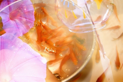 金魚のイメージ合成