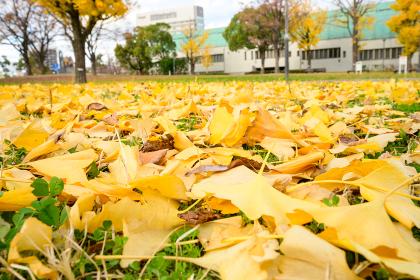 秋の勝山公園