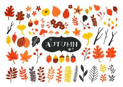 手描きの秋の植物イラストセット