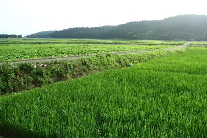Wu Tou hot springs village;farmland