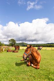 日本の北海道東部・9月、放牧された馬