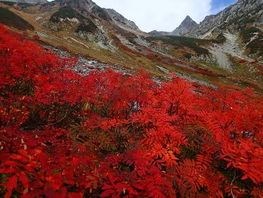 北アルプス槍沢のナナカマドの紅葉と槍ヶ岳