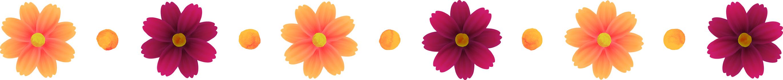 オレンジ色のコスモスとチョコレートコスモスのカットイラスト、ライン状の装飾、秋イメージ