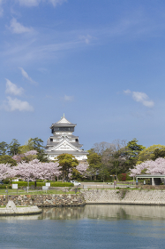 紫川の桜と小倉城天守閣 福岡県北九州市