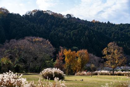 国営飛鳥歴史公園石舞台地区 紅葉