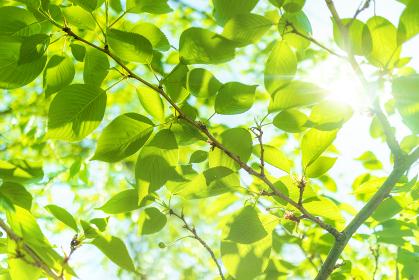 新緑 木漏れ日 5112