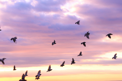 朝焼けの中を飛ぶ鳥の群れ