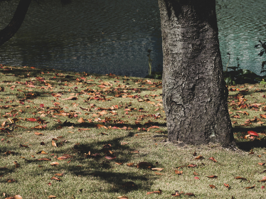 東京の浜離宮庭園の風景 10月