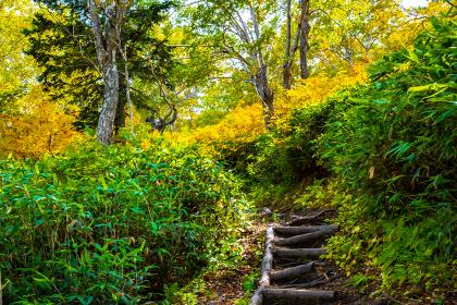 紅葉する山道