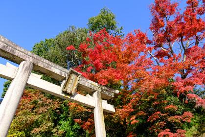 朝護孫子寺 (奈良県生駒郡 2020/11/18撮影)