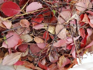 公園の落葉の掃除
