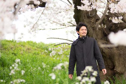 花見を楽しむ一人の男性(桜)