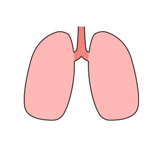 肺 アイコン
