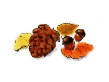 手描きイラスト素材 植物 松ぼっくり, どんぐり 秋 秋イメージ